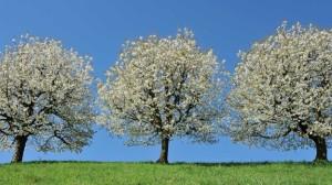 bon-arbre-05